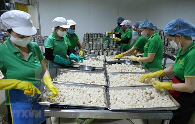 Vietnam ingresa casi dos mil millones de dolares por ventas de frutas y vegetales hinh anh 1
