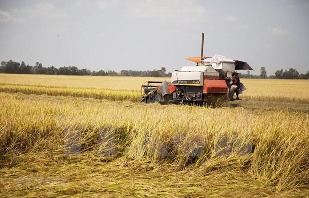 Vietnam supera a Tailandia en valor de exportaciones arroceras hinh anh 1