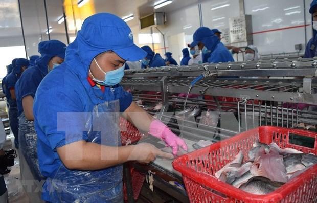 Aumentan exportaciones vietnamitas de mariscos a la UE hinh anh 1