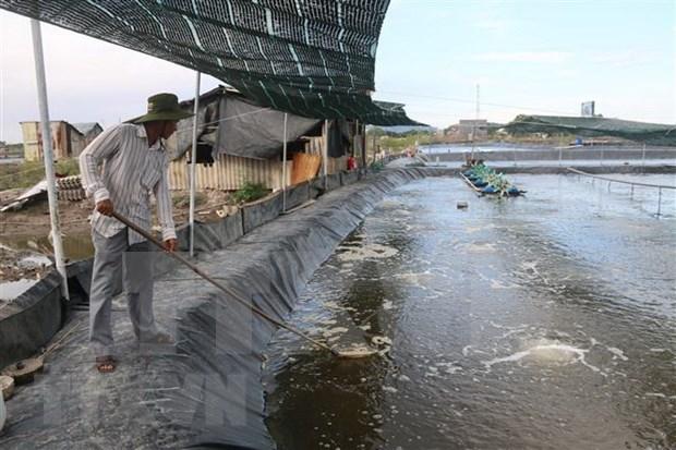Buscan convertir a Bac Lieu en centro de industria camaronera de Vietnam hinh anh 1