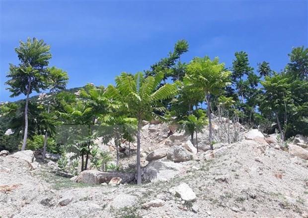 Provincia vietnamita de Ninh Thuan promueve proteccion de bosques hinh anh 1