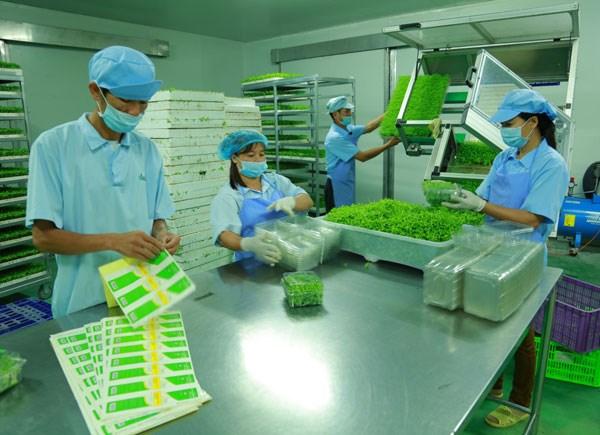 Provincia vietnamita de Vinh Phuc impulsa desarrollo de industria de procesamiento hinh anh 1