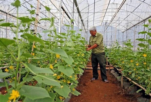 Fortalecen negocios sostenibles en Vietnam para elevar competitividad en mercado mundial hinh anh 1