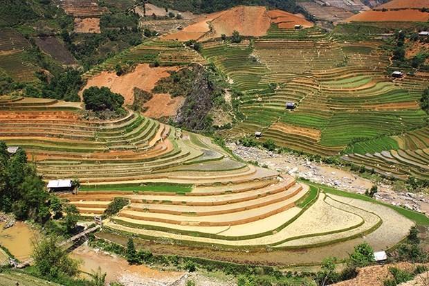 Celebraran Festival de temporada dorada de arrozales en Quang Ninh hinh anh 1