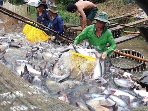 Exportaciones acuicolas de Vietnam siguen en recuperacion hinh anh 1