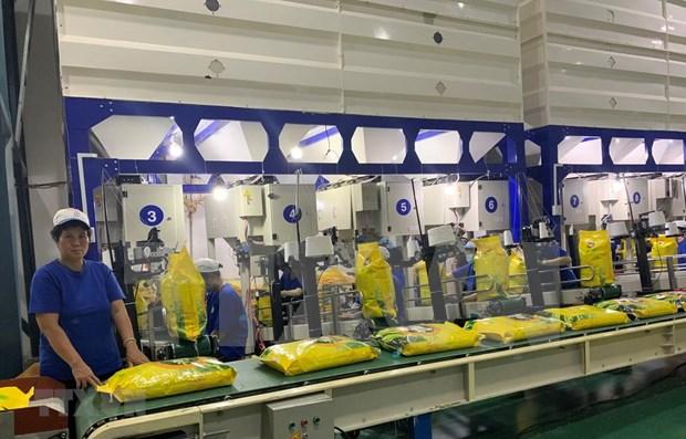 Empresa vietnamita envia primer lote de arroz libre de impuesto a la Union Europea hinh anh 1