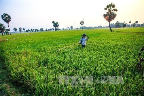 Hanoi impulsa el desarrollo cadena de produccion y consumo de productos hinh anh 1