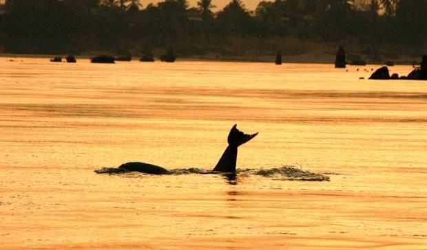 Camboya nomina cuatro zonas de conservacion de delfines a la lista de la UNESCO hinh anh 1