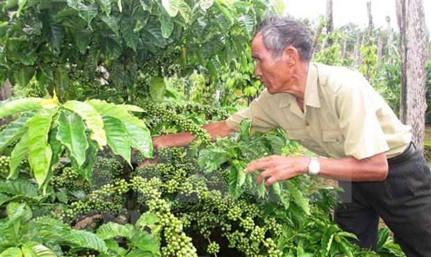 Bac Lieu cumple meta de reduccion de pobreza sostenible hinh anh 1