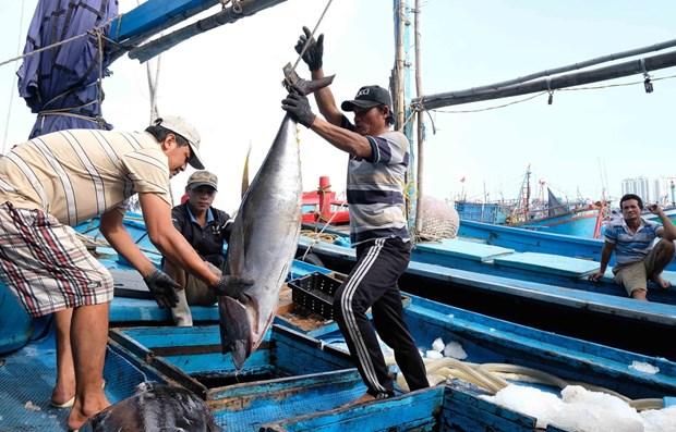 Garantizan seguridad de pescadores en medio del COVID-19 hinh anh 1