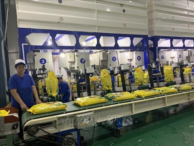 Vietnam por garantizar normas sobre la certificacion de arroz aromatico exportable a la UE hinh anh 1