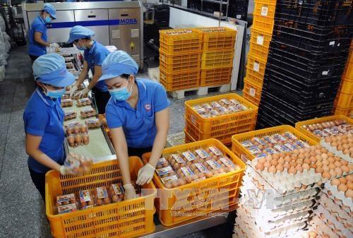 Vietnam regula contingentes arancelarias para importacion de tabaco crudo y huevos hinh anh 1