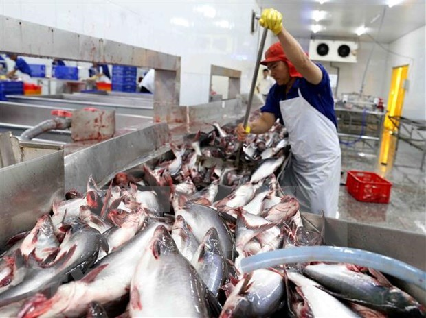 Doce empresas vietnamitas autorizadas a reexportar mariscos a Arabia Saudita hinh anh 1