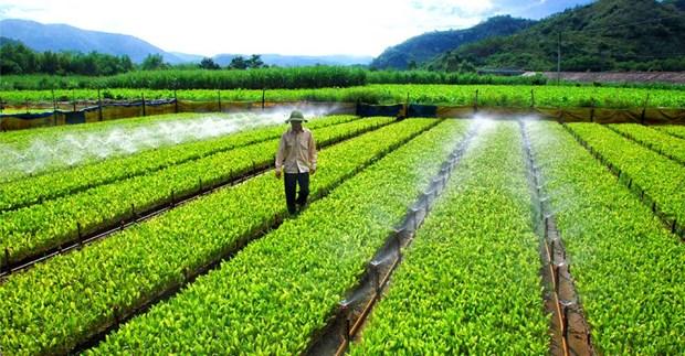 Mas de la mitad de empresas vietnamitas se ven afectadas por el cambio climatico hinh anh 1