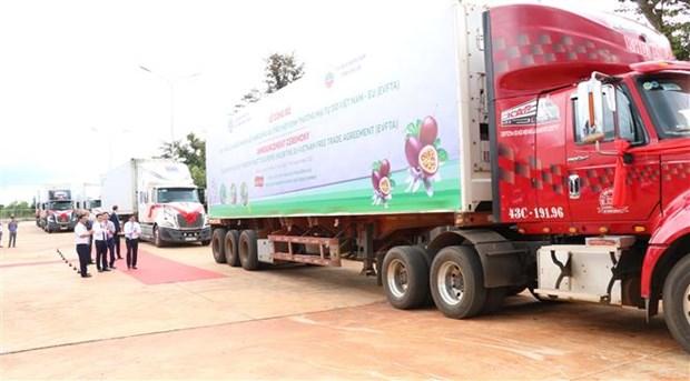 Provincia vietnamita envia primer lote de maracuya a la Union Europea bajo el EVFTA hinh anh 1