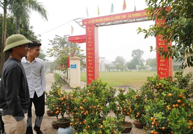 Pobladores de la comuna de Dong Tam se esfuerzan por un futuro mas brillante hinh anh 1