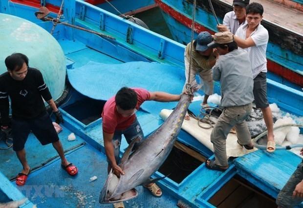 Exhortan en Vietnam mayor esfuerzo en prevencion contra la pesca ilegal hinh anh 1
