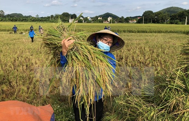Vietnam traza 17 objetivos de desarrollo sostenible hasta 2030 hinh anh 1