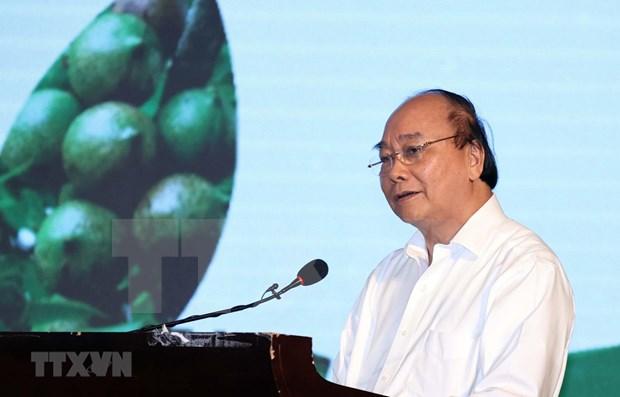 Premier de Vietnam exige mayores esfuerzos para garantizar cultivo eficiente de macadamia hinh anh 1