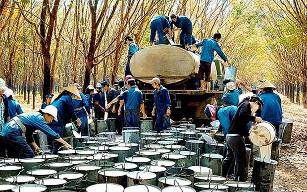 Aumenta valor de exportacion de caucho de Vietnam hinh anh 1