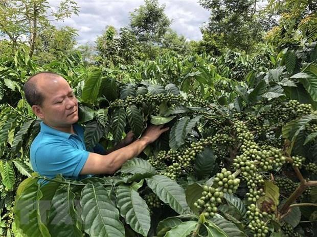 Aumentan exportacion agricola de Vietnam a UE tras entrada en vigor de EVFTA hinh anh 1