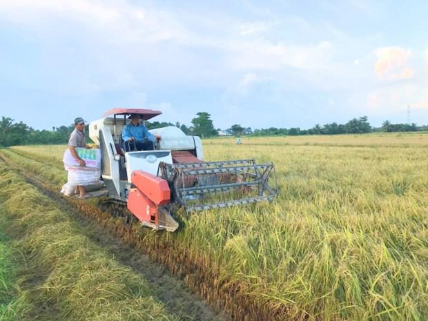 Provincia vietnamita de Vinh Long por aumentar 36 por ciento su ingreso presupuestario hinh anh 1