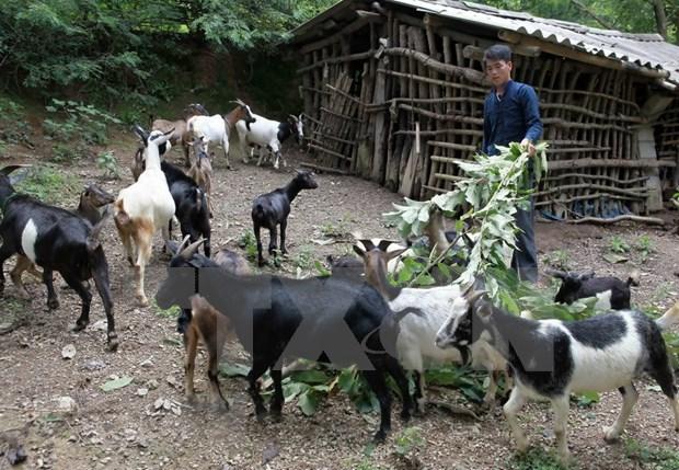 Provincia vietnamita de Kien Giang avance en reduccion de pobreza sostenible hinh anh 1