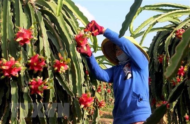 India y Vietnam disponen de grandes potencialidades para promover exportaciones de frutas hinh anh 1