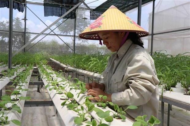 Agricultura: columna vertebral de la economia vietnamita hinh anh 1