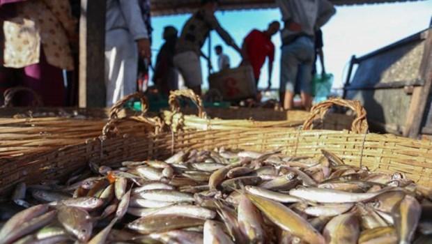 Disminuyen exportaciones de productos acuaticos de Camboya hinh anh 1