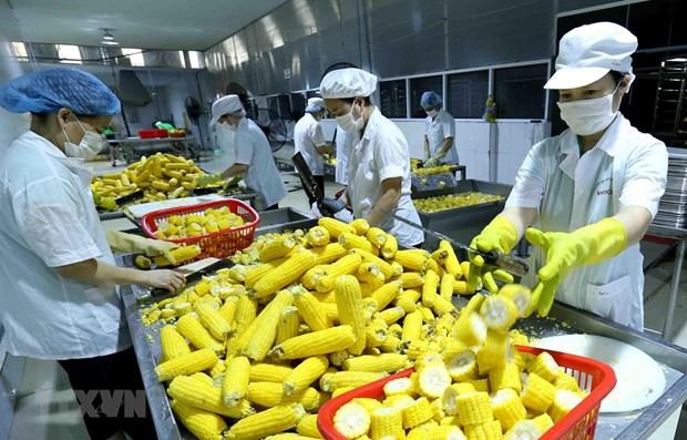 Vietnam ingresa fondo millonario por exportaciones de productos agricolas a UE en agosto y septiembre hinh anh 1