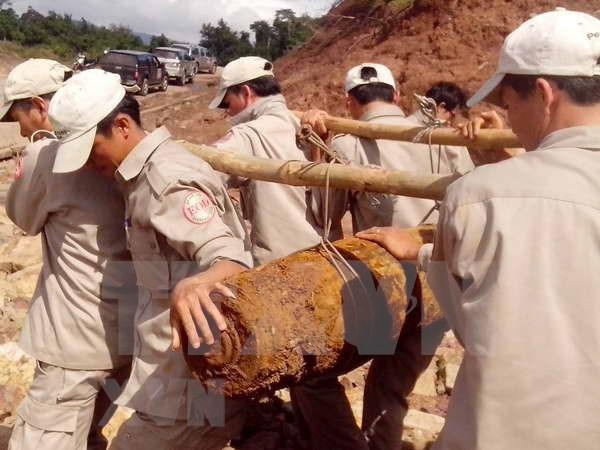 Destacan aportes de Organizacion no gubernamental de Peace Trees Vietnam hinh anh 1