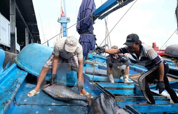 ASEAN Today destaca esfuerzos de Vietnam en la lucha contra la pesca ilegal hinh anh 1