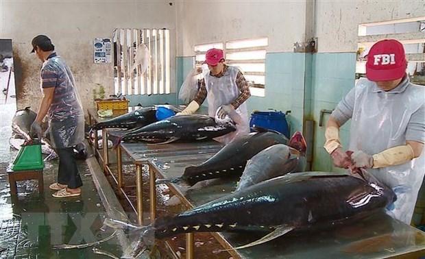Exportaciones de atun de Vietnam a Italia registraron aumento de 8,5 por ciento en septiembre hinh anh 1
