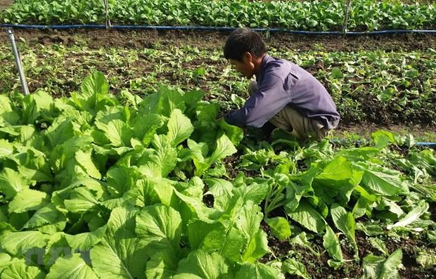 Vietnam fomenta desarrollo de agricultura organica hinh anh 1