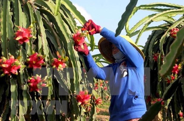 Importacion y exportacion de bienes de Vietnam supera el objetivo establecido hinh anh 1