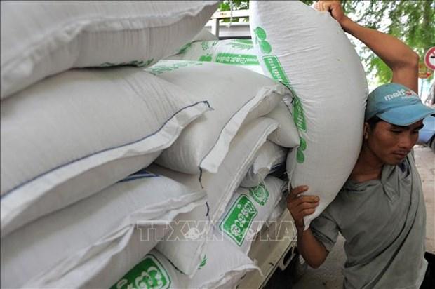 Exportaciones de arroz camboyano con fuerte aumento de enero a octubre hinh anh 1