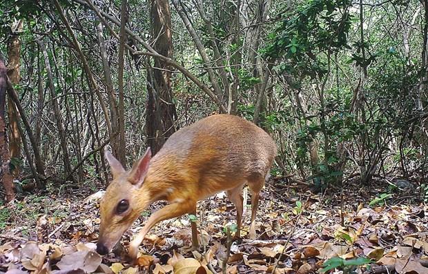 Vietnam intensifica cooperacion en preservacion de la biodiversidad hinh anh 1