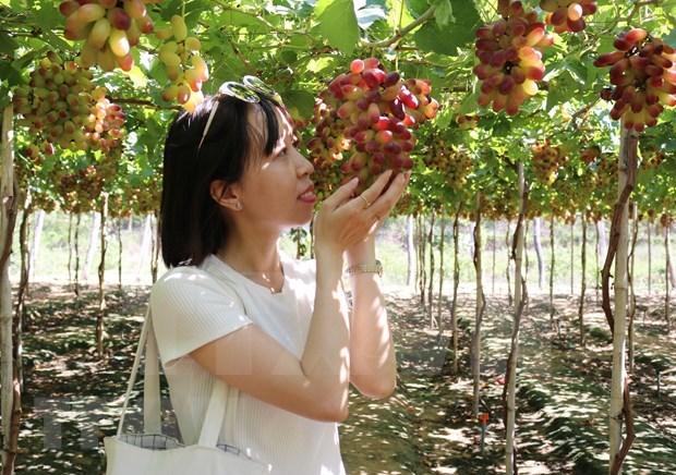 Expertos vietnamitas proponen soluciones para favorecer exportacion de productos agricolas en el contexto del COVID-19 hinh anh 1