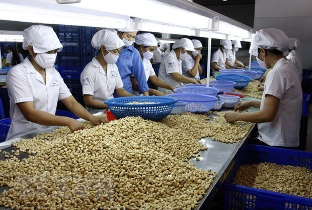 Industria de anacardo de Vietnam se esfuerza por mantener el numero uno mundial hinh anh 1