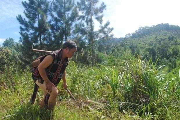 Vietnamitas se benefician del proyecto de gestion de recursos naturales Green Annamites hinh anh 1
