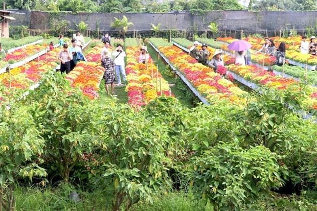 Aumentara siembra de flores y plantas ornamentales en Dong Thap hinh anh 1