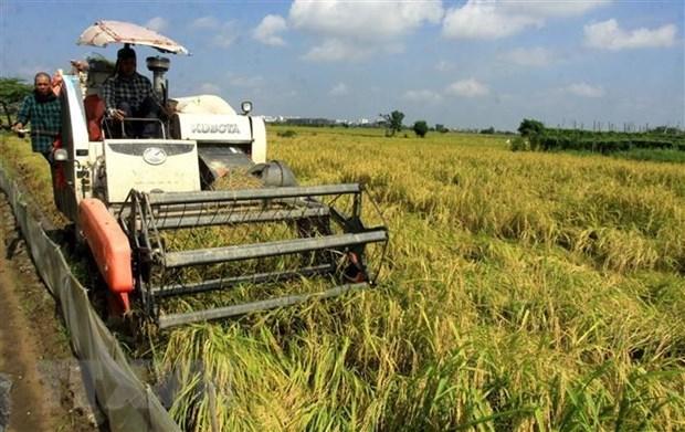 Vietnam por garantizar la seguridad alimentaria nacional hasta 2030 hinh anh 1