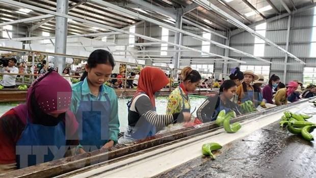 Banco asiatico aprueba prestamos millonario para desarrollo agricola en Camboya hinh anh 1