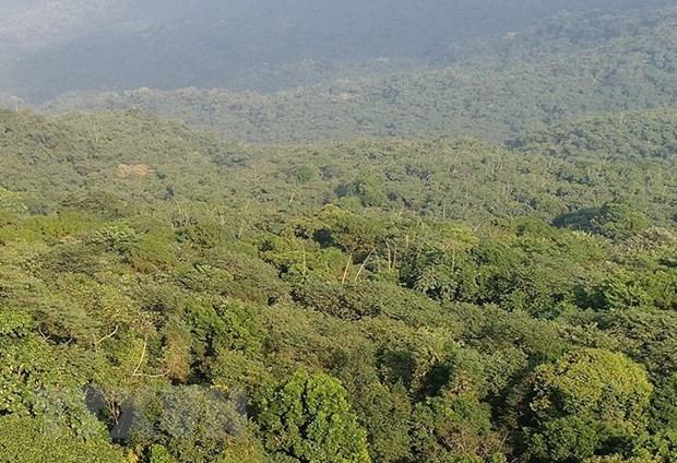 Provincia de Ninh Thuan fortalece proteccion y repoblacion forestal hinh anh 1