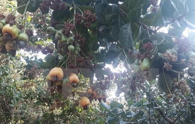 Aumentan exportaciones agricolas de Vietnam hasta noviembre hinh anh 1