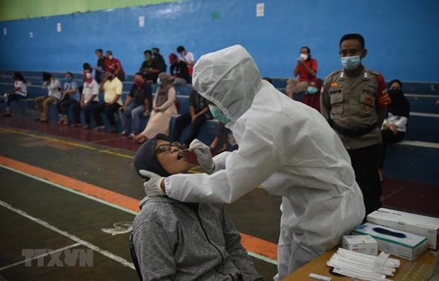 Indonesia se prepara para importar millones de dosis de vacuna contra el COVID-19 hinh anh 1