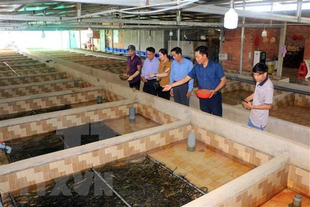 Mas de 9,6 millones de trabajadores rurales se benefician del proyecto de capacitacion hinh anh 1