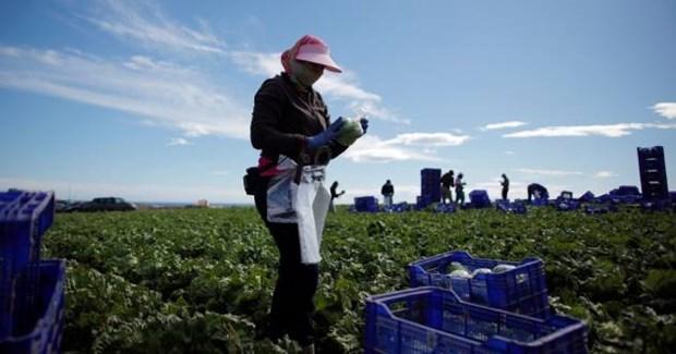 Vietnam presta atencion especial a los migrantes hinh anh 1