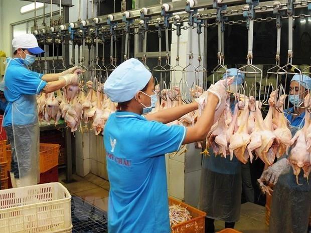 Inauguran la mayor planta procesadora avicola en Vietnam hinh anh 1